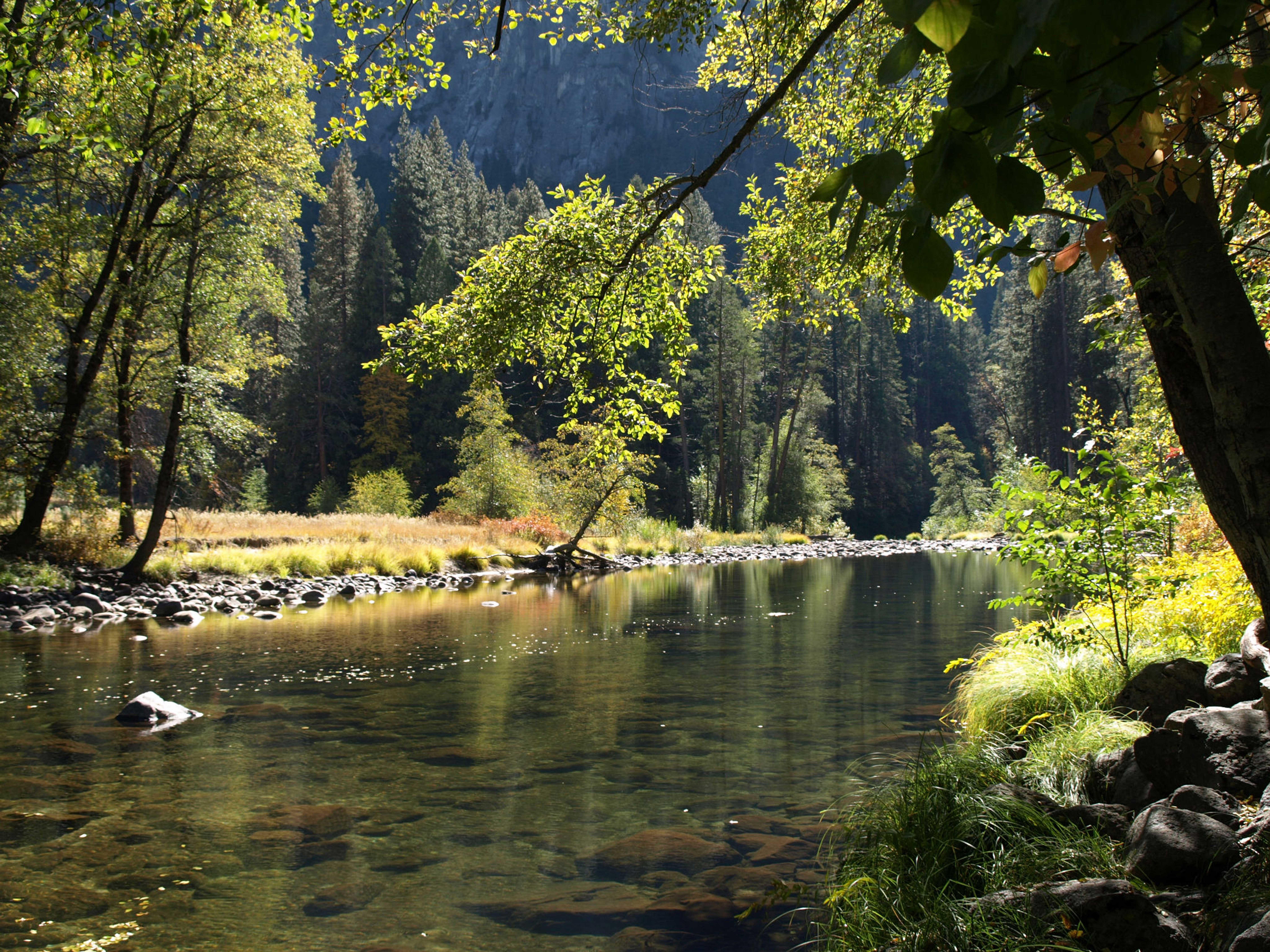 Чистейшие воды реки в лесу