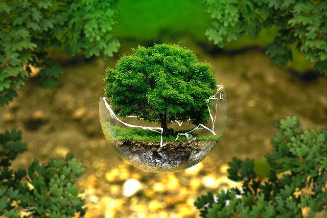Рынок экологических услуг